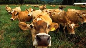 Национальный союз мясопереработчиков поддержал перенос сроков внедрения электронной ветсертификации