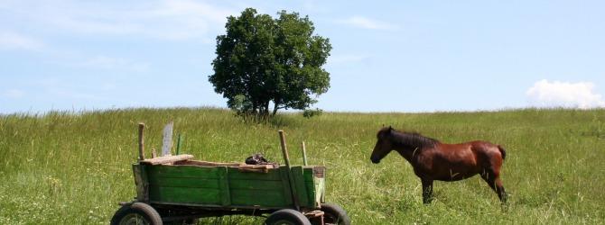 Снова телега впереди лошади. О стратегии развития здравоохранения
