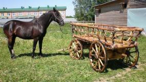 Еще раз про телегу впереди лошади. О стратегии формирования ЗОЖ