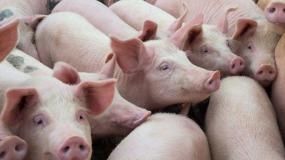 Саймон Грей — генеральный директор Genesus в России, странах СНГ и Европы подтвердил участие в совещании мясопереработчиков 10 октября
