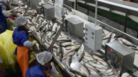 Верховный Суд поддержал взыскание компенсации с ФНС в пользу предприятия по рыбопереработке