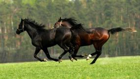 Куда и как смотрят контролеры? Ведь кони все скачут и скачут, а избы…